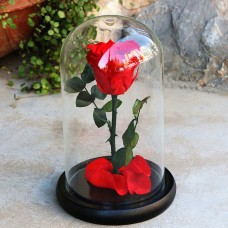 Beauty And The Beast Real Preserved Red Rose Glass Dome Best Gifts for Lovers